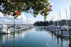 De zomer bij Duivenbaai Marina Kerikeri, Nieuw Zeeland, NZ, met pohut Stock Foto's