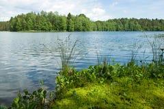 De zomer bij het bosmeer Stock Afbeelding