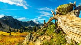 De zomer bij Onderstel Rainier National Park, Washington royalty-vrije stock fotografie