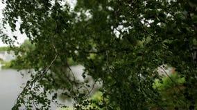 In de zomer, blaast de dag de wind op de boom stock video