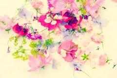 De zomer, bloemen, artistieke achtergrond met verscheidenheid van bloemblaadjes en kleuren Stock Foto's