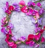 De zomer bloemenachtergrond met kleurrijke bloem Royalty-vrije Stock Foto