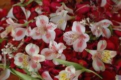 De zomer bloemenachtergrond van aard-bloem bloemblaadjes Alstroemeria stock foto