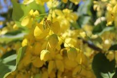 De zomer blossome in Bahai-Tuin Akko Stock Foto
