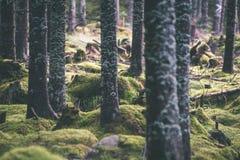 De zomer bosbomen achtergronden van het aard de groene houten zonlicht - vi Stock Afbeelding