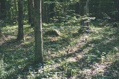 De zomer bosbomen achtergronden van het aard de groene houten zonlicht - vi Stock Foto