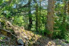 De zomer boshoogtepunt van zonneschijn in al zijn schoonheid Stock Foto's