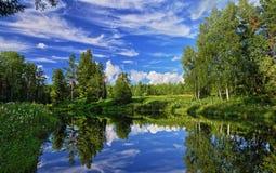 De zomer bosmeer Stock Fotografie