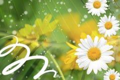 De zomer, Daisy, de Gele Achtergrond van de Bloem Royalty-vrije Stock Afbeeldingen