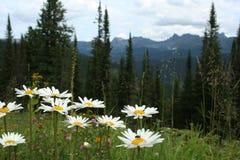 De zomer in de bergen Stock Afbeelding