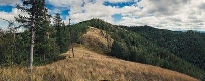 De zomer in de bergen van Zuidenural Stock Fotografie