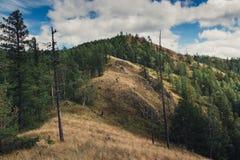 De zomer in de bergen van Zuidenural royalty-vrije stock foto's