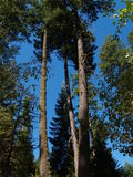De zomer in de Bomen royalty-vrije stock fotografie