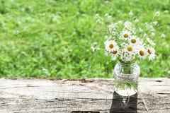 De zomer of de lente mooie tuin met madeliefje-kamille bloemen Royalty-vrije Stock Foto