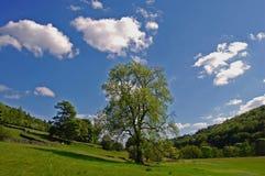 De zomer in de Vallei Derwent Royalty-vrije Stock Foto