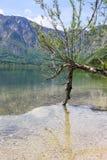 De zomer door het meer Stock Afbeeldingen