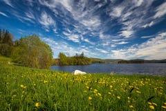 De zomer door de kusten van Jonsvatnet-meer, het gebied van Trondheim noorwegen stock fotografie