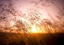 De zomer Droog Gras Stock Foto's