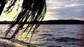 De zomer duidelijke zonsondergang trow de boom in jachthaven stock footage