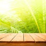 De zomer en aardproductvertoning met houten lijstteller op het bladachtergrond van de onduidelijk beeldkokosnoot verse groene tro royalty-vrije stock afbeeldingen
