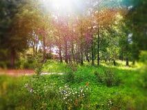 De zomer en groene dag Stock Foto's