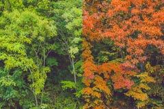 De zomer en de herfst bostransformaties van de zomer in de herfst stock afbeelding