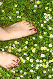 De zomer - feett op gras met kamille Stock Foto's