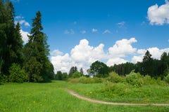 De zomer Forest Landscape Stock Afbeeldingen