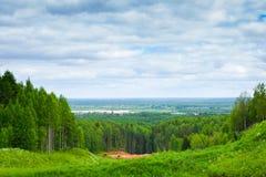 De zomer Forest Landscape Stock Foto's