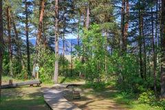 De zomer Forest Landscape Houten weg aan het overzees in een pijnboombos Royalty-vrije Stock Afbeelding