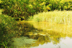 De zomer Forest River op Sunny Day Royalty-vrije Stock Afbeeldingen