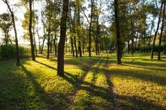 De zomer Forrest Stock Afbeelding