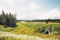 De zomer Forrest Stock Foto