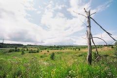 De zomer Forrest Royalty-vrije Stock Fotografie
