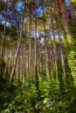 De zomer Forrest Royalty-vrije Stock Foto's