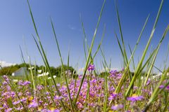 De zomer gelukkige bloem 07 van de lente Stock Foto's