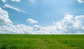 De zomer glanzende weide met blauwe hemel en pluizige wolken Stock Foto's