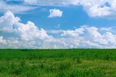 De zomer glanzende weide met blauwe hemel en pluizige wolken Royalty-vrije Stock Fotografie