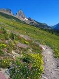 De zomer in Gletsjer Stock Afbeeldingen