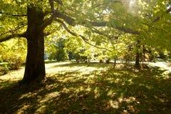 De zomer groen bos met zonstralen Royalty-vrije Stock Fotografie