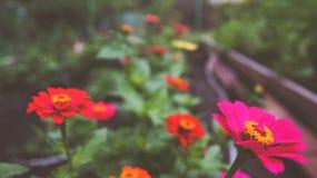 De zomer heldere bloemen in tuin stock foto's