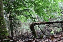 De zomer in het bos, aard royalty-vrije stock afbeelding