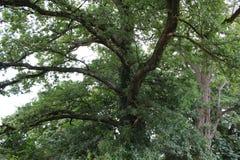 De zomer in het bos, aard royalty-vrije stock afbeeldingen