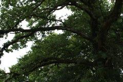 De zomer in het bos, aard royalty-vrije stock foto
