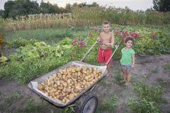 In de zomer in het dorp, dragen de kinderen in de tuin potat Royalty-vrije Stock Afbeeldingen
