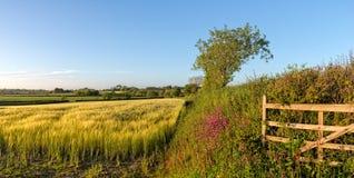 De zomer in het Engelse Platteland stock afbeeldingen