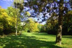 De zomer in het park met groen bomen en gras Royalty-vrije Stock Fotografie
