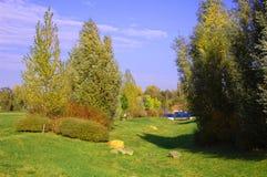 De zomer in het park met groen bomen en gras Stock Foto's