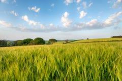 De zomer in het Platteland Van Cornwall royalty-vrije stock foto's