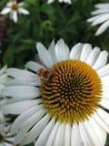 De zomer het zoemen Stock Foto